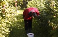 fo 138 200x130 Visit our garden