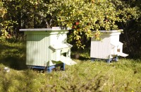 fo 178 200x130 Visit our garden