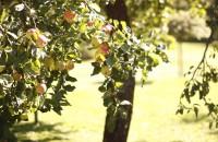 fo 334 bis 200x130 Visit our garden